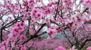 赏桃花泡温泉,灰汤华天城2016年3-4月优惠温泉套餐
